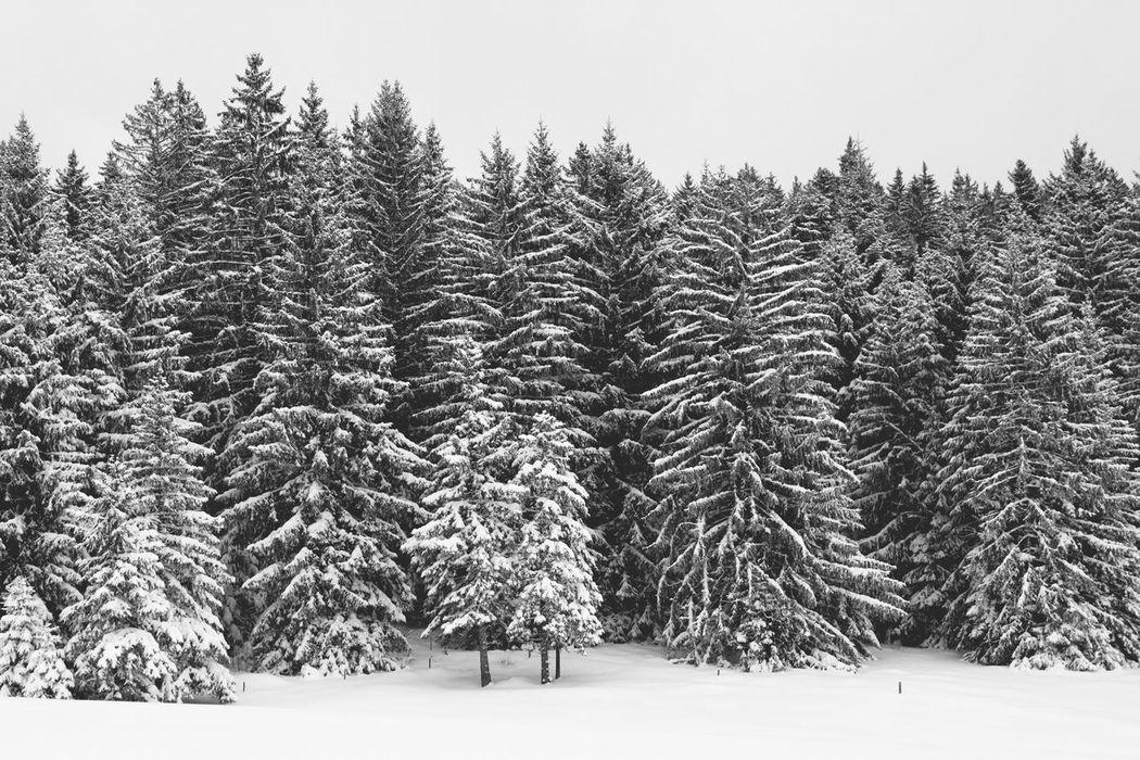 Schnee im Schwarzwald Blackforest Snow Tree Winter Forest Landscape Outdoors Wald Hochschwarzwald Perspectives On Nature