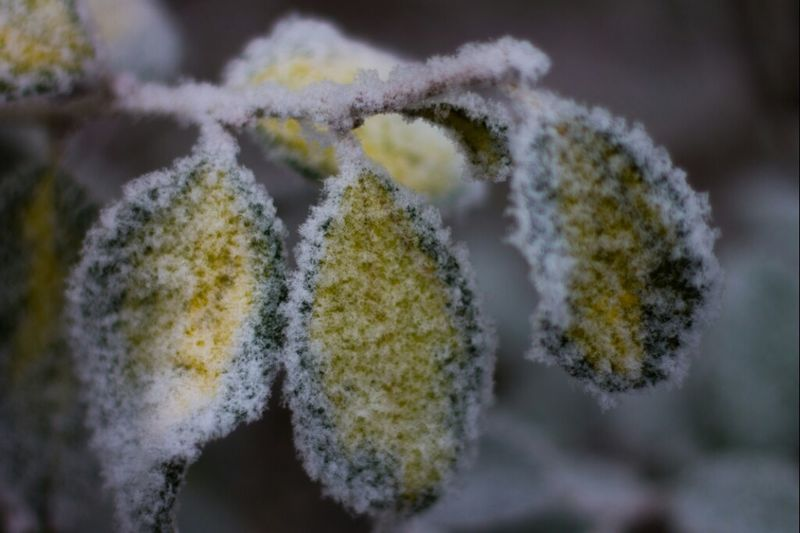 #snow #nature