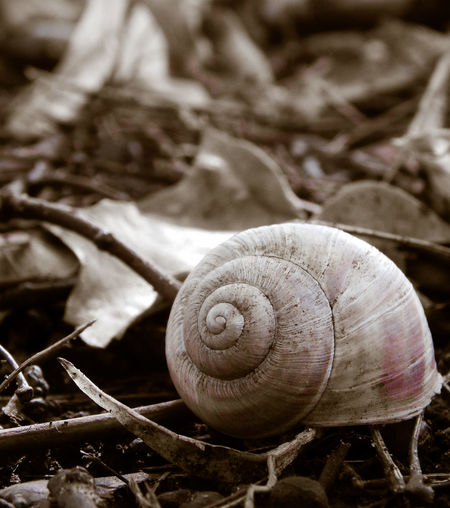 Close-up Focus On Foreground Forest Nature No People Outdoors Shell Snail🐌