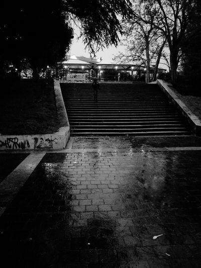Tree Water Reflection EyeEm Gallery Outdoors Leica Lens Leica Huawei P9 Huawei P9. Black And White Photography Blancoynegra Stairs No People