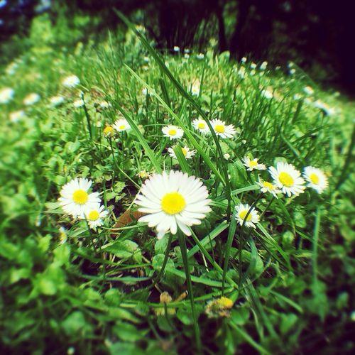Primavera a ojo