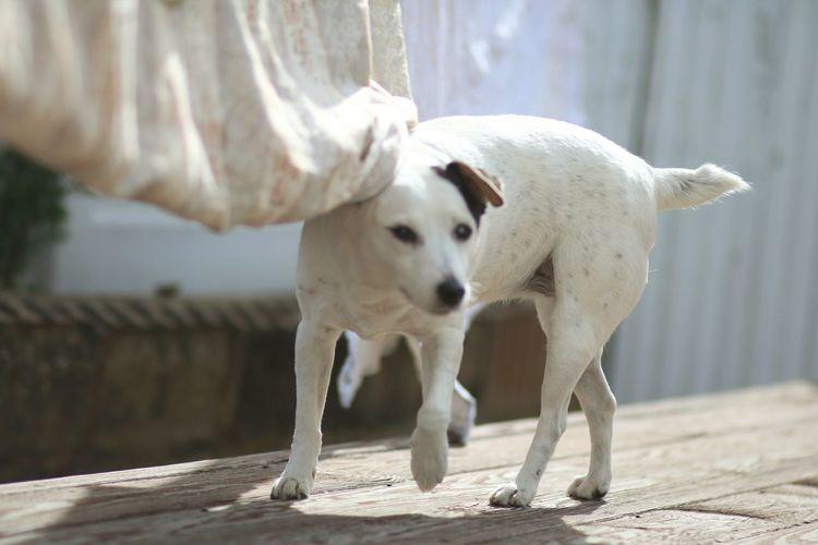 Potraitist Canon TeamCanon Canonbringit Jack Russell Dog❤ Dogs Of EyeEm Dogoftheday Terrier EyeEm Best Shots EyeEm Animal Lover