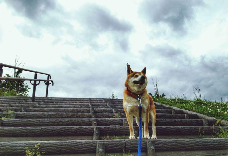 partner🌟🐶🐶🌟Lan EyeEm Selects Pets Dog Portrait Front View Sky Animal Themes Cloud - Sky