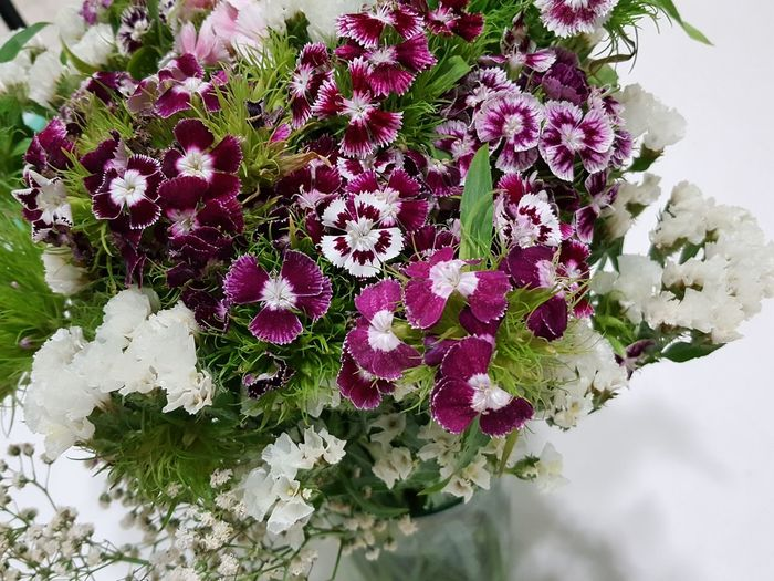 Flower Nature Beauty In Nature Plant High Angle View No People Growth Green Leaves Day Outdoors Freshness Magenta White Fragility Flower Head Close-up Purple Flower Magenta Flower Magenta Color