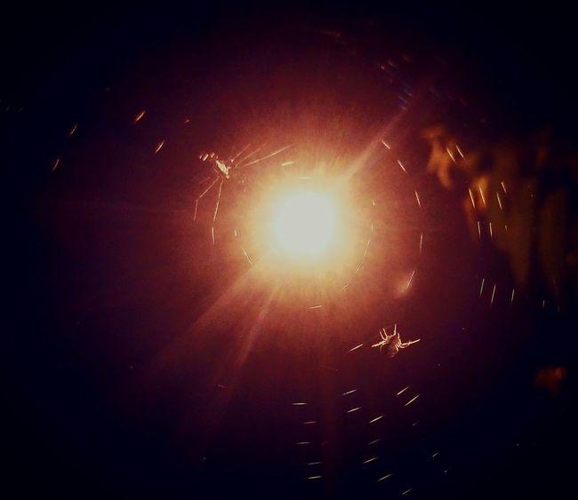 Maximum Closeness Night Nightlife Outdoors Classicshots Awesome_shots Hanging Close-up Bestoftheday All Time Favorite Macro_collection Dark Photography Best Shots Nature Awesome_nature_shots Naturelover Insects  Insects Collection