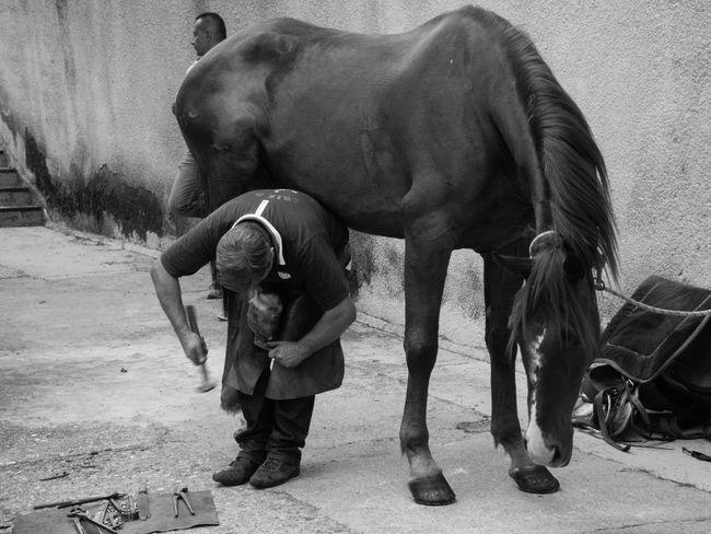 Autunno In Barbagia Bitti Cavallo Cortes Apertas Ferratura Horse Sardegna Sardinia