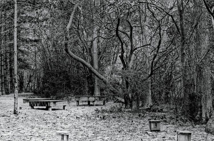 WoodLand Bare Tree Tree Branch Nature Day Non-urban Scene Beauty In Nature No People Solitude Outdoors Tranquility Tranquil Scene Creepy Eery Eery Woods Solitude Is A Place For Purification Scenics Solitude And Silence Woods Wooded Area Wooded
