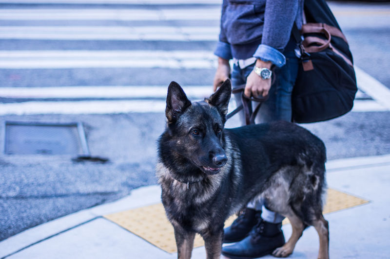 Adult Canine Casual Clothing Day Dog Dog Walking Domestic Animals German Shepherd Human Body Part Human Hand Low Section Mammal Mansbestfriend Men One Animal One Person Outdoors Pets Photographyisthemuse Real People