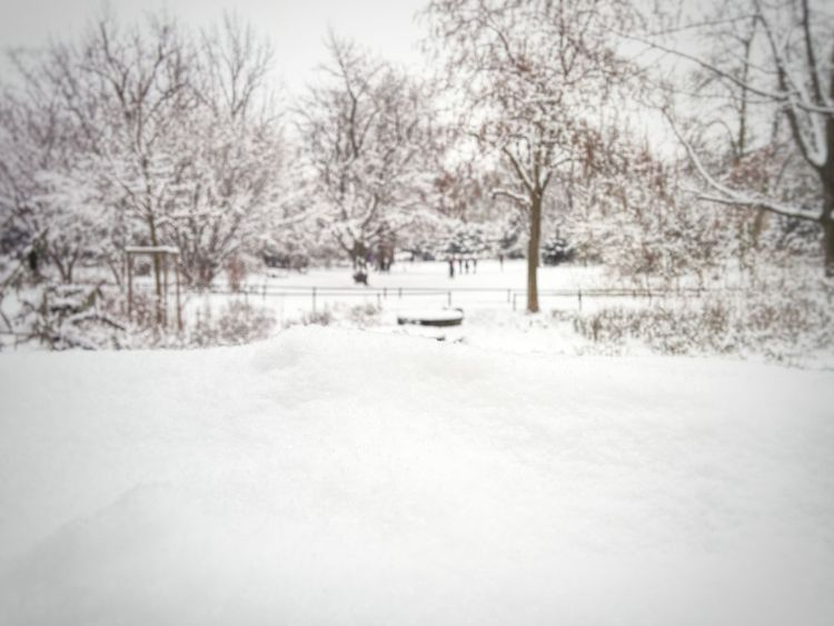Hello World Snow ❄
