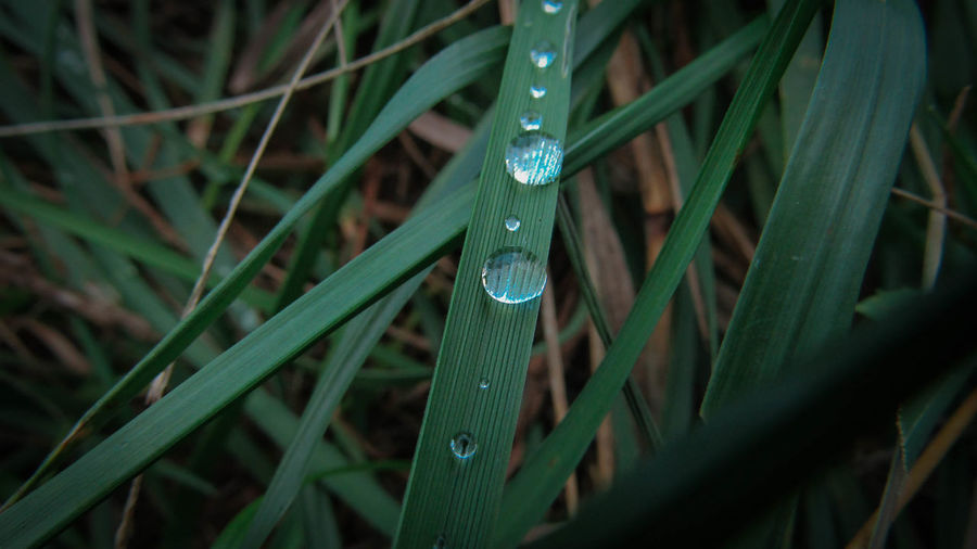 Blade Of Grass Day Drop Grass Green Green Color Leaf Nature Plant RainDrop Season  Water Water Drop Weather