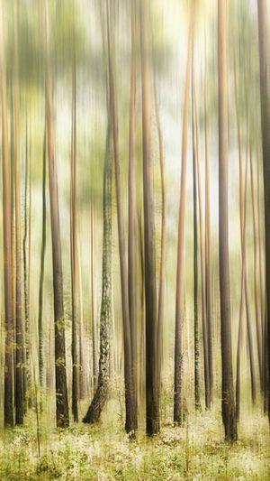 Место для светлых мыслей. ArtWork Landscape Autumn Nature Outdoors Trees Forest Siberia Russia осень