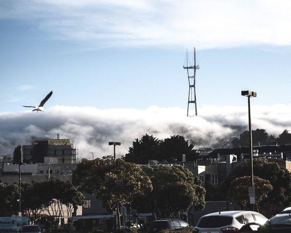 Fog SF Bird Foggy Moody Sky Photo Love City Sanfrancisco