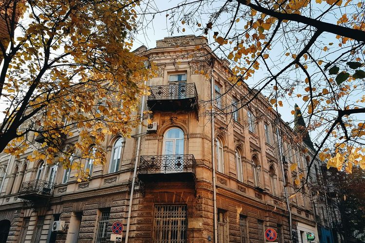 City of Autumn Architecture Low Angle View Built Structure Day Arch No People Building Exterior Outdoors Tree Sky Autumn Tbilisi Tbilisi Georgia Street Photography Yardhouse Autumn Leaves Streetphotography Autumn Colors Tree Architecture Freshness