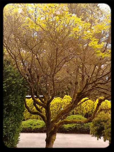 I like the look of this true in the lighting WA Streamzoo Nature Yellow