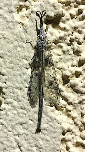 Looks like the Mayflies are coming out a month early. Winged Insects Night Photography Insect Photography IPhone Photography Mayfly Nature No People Insect Beauty In Nature Outdoors Close-up