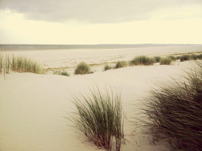 Baltrum, Ostfrießland, North Sea, August Water Dunes North Sea German Ocean Eastern Frisia baltrum