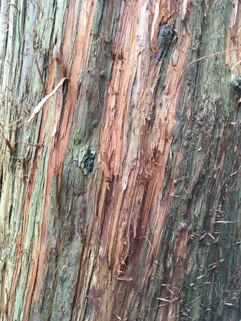 Redwood bark Naturaltexture Red Green Tree Bark Redwood Textured  Full Frame Weathered Backgrounds Close-up Day No People