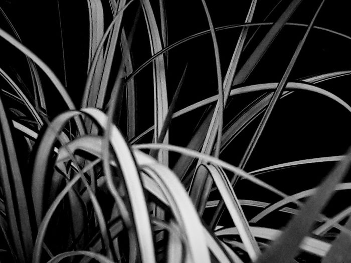 Light And Shadow Grass Abstractart Lines, Shapes And Curves Grass Grassland First Eyeem Photo EyeEmNewHere EyeEm Nature Lover Smartphonephotography Blackandwhite Outdoor Photography Nightphotography Curves And Lines Nature Photography Fragility Grey Focus Black Background White Line Summertime Nightshot Backgrounds Complexity Abstract Full Frame Close-up Abstract Backgrounds Textured Effect The Creative - 2018 EyeEm Awards My Best Photo