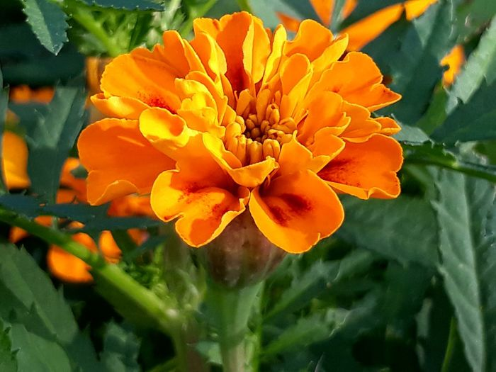 Eyem Nature Orange Colours Flowers Fiore Flower Lovers Nature Naturelovers Macro Macro Photography Macro Flower Eyem EyEm Selects Eyem Gallery Eyemphotography Eyem4photography Green Colours Thank You My Friends 😊 Flower Head Flower Petal Close-up Plant Blooming In Bloom Plant Life Botany Blossom
