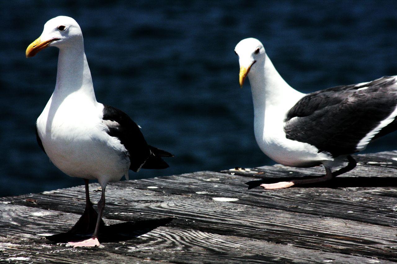 Seagulls Perching On Boardwalk Against Sea