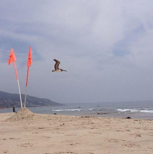 Malibu Beach Life Is A Beach California Bird Photography