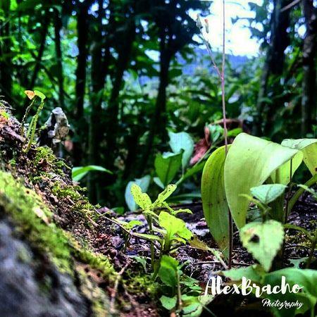 Colour Of Life Hanging Out Taking Photos Check This Out Capture The Moment Popular Photos Popular Relaxing Enjoying Life XperiaZ3 Primeroecuador Ecuadoramalavida Greenery Green Nature