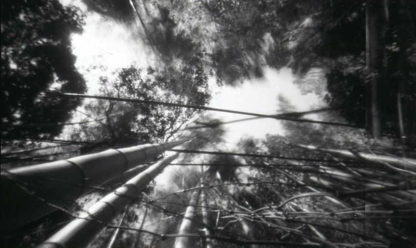 Bamboo Forest, Arashiyama, Japan Tree Forest Nature Cameraobscura Nolens Pinolina Handmade Pinhole Camera MadeinItaly Analogue Photography Pinhole Photography Pinhole Analogic 35mm Film PinholeCamera Kyoto,japan Dream Analoguephotography Arashiyama Bamboo Grove Bamboo Forest Pinhole-foro Stenopeico EyeEm Best Shots EyeEm Nature Lover EyeEmBestPics Film Photography