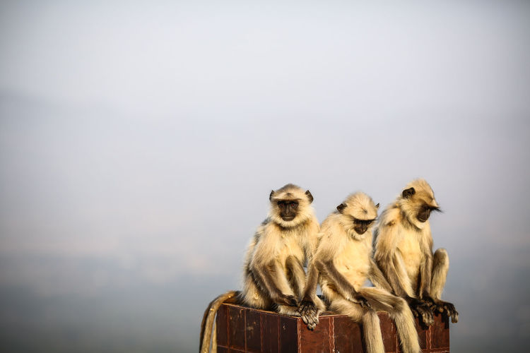 Close-Up Of Monkeys Sitting Against Sky