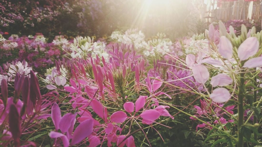 Flowers Chiang Mai Thailand Wat Pan Tao Ich habe meinen Herz in Thailand verloren.