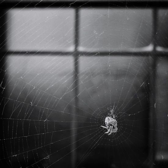 Spider Web No People Close-up Nature Day Fragility Huawei P9 Photos Beauty In Nature Black & White Huwei P9 Capture The Moment Light And Shadow Black And White Spider Round And Square
