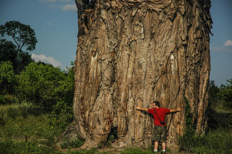 Loving Nature Adventure Africa Baobob Tree Brown Carefree Escapism Huge Huge Tree Large Man Natue Remote Textured  Travel Tree Hug Trees