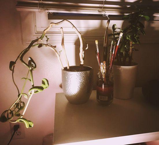 Plants paint brushes
