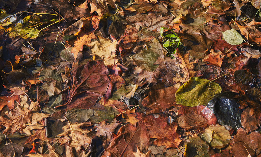 Dead leaves in a puddle Dead leaves slowly decaying in a puddle. Feuilles mortes pourissant lentement dans une mare. 2017 FUJIFILM X-T2 Fall Colors Olney Quebec Autumn Canada Fall Leaf Leaves Nature No People Sherbrooke