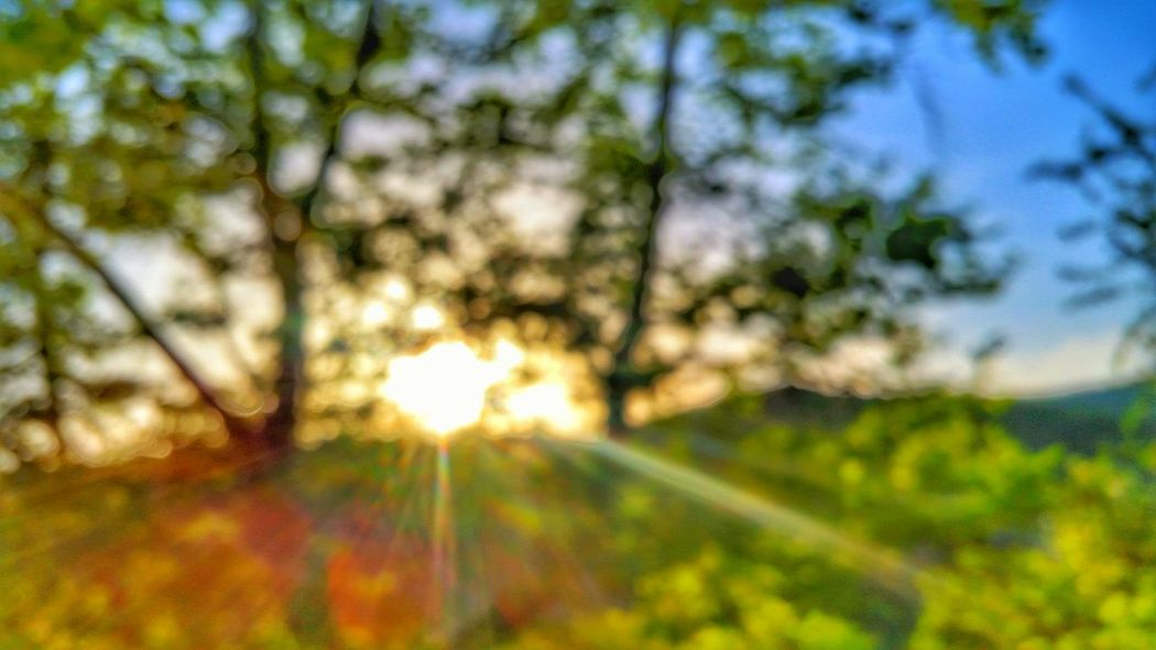 Blurry trees Tree Sun Beauty In Nature Scenics Growth Nature Sunbeam Tranquil Scene Branch Tranquility Plant Outdoors Lens Flare Non-urban Scene Day Sky Bright Focus On Foreground Remote Streaming