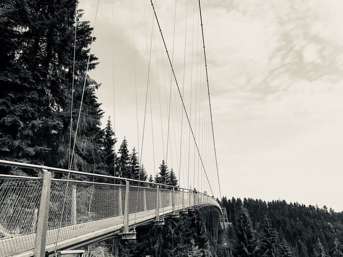 Suspension bridge in Black Forest Black Forest Tourist Attraction  Baden-Württemberg  Schwarzwald Sky Connection Bridge Cloud - Sky Bridge - Man Made Structure Nature Plant Outdoors Suspension Bridge The Way Forward Cable Built Structure