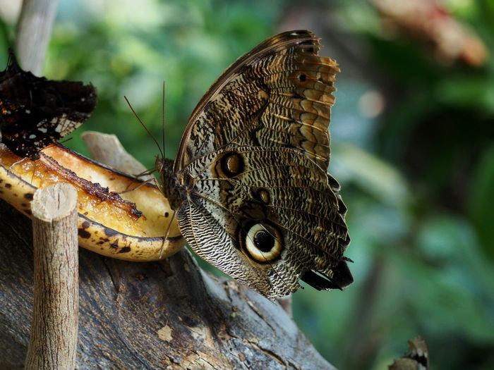 Animal Animal Body Part Animal Head  Animal Themes Animal Wildlife Animal Wing Animals In The Wild Butterfly - Insect Close-up Day Focus On Foreground Insect Invertebrate Nature No People One Animal Outdoors Plant Poisonous Reptile Tree Vertebrate Wood - Material Zoobudapest Zoology