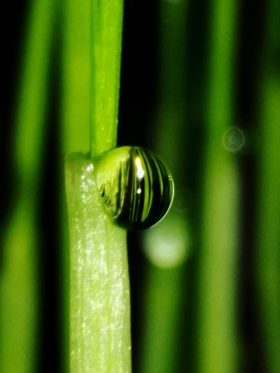 Grass Close-up Green Color Water No People Drop Nature Beauty In Nature Day Waterdrop Glanz Wassertropfen Honor5x