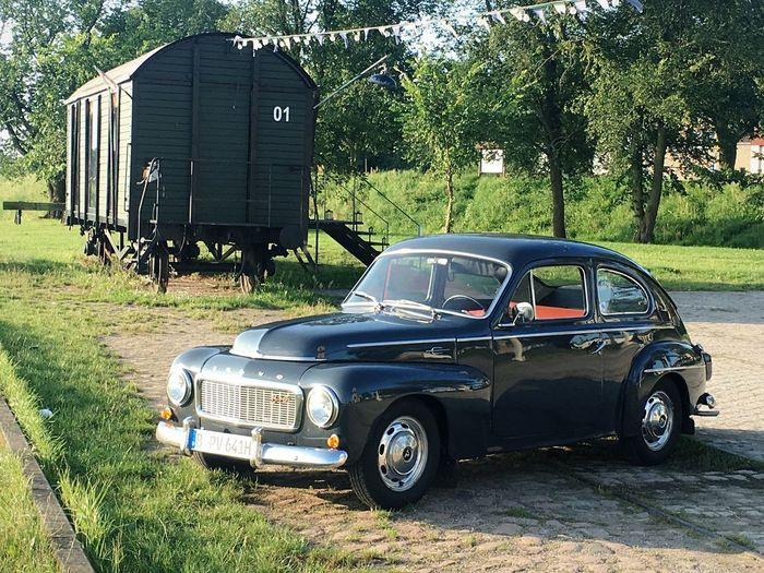 Volvo Pv Oldtimer Land Vehicle Mode Of Transportation Motor Vehicle Transportation Car Plant Tree