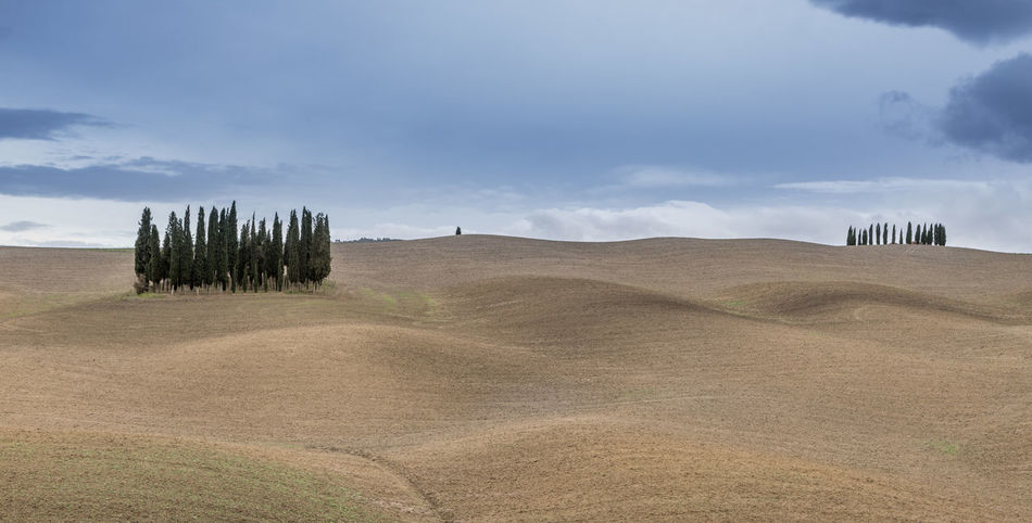 Val d'Orcia Environment Landscape Sky Scenics - Nature Tranquil Scene Cloud - Sky Land Tranquility Beauty In Nature Plant Nature Field No People Day Tree Agriculture Non-urban Scene Rural Scene Horizon Horizon Over Land Outdoors Rolling Landscape Arid Climate EyeEmNewHere
