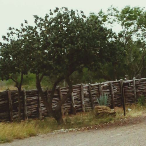 Ranch Country Life Mesquite Tree Post Fence Manmade