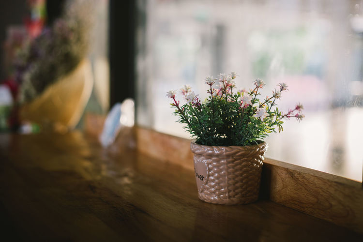 View of potted plant on table by window