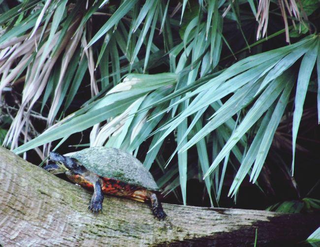Animal Themes Animal Wildlife One Animal Turtle On A Tree Close-up Leaf Greenery Nature Outdoors