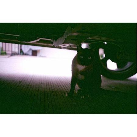 """ hiding "" Camera : LC-A Film : Fuji Superia X-Tra 400 Cat Thailand Afterzero LCA Filmphotography Filmisnotdead Ishootfilm Iusefilm Fujifilm Fuji Superia Xtra400 Film 35mm Analogue Buyfilmnotmegapixels"