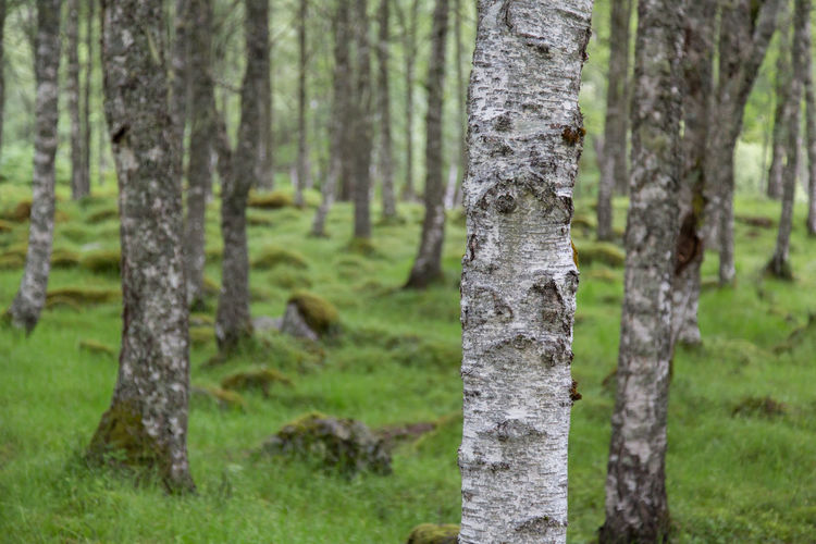 Forêt de