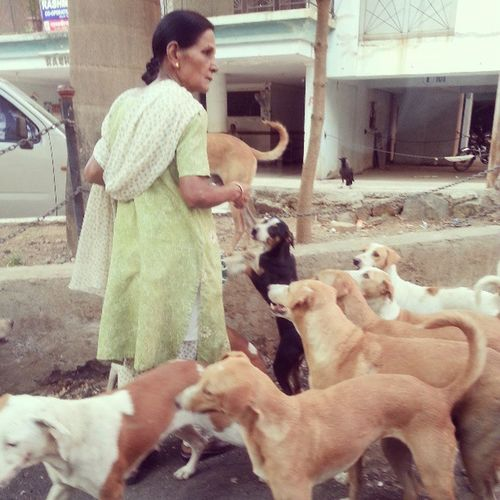 And on Women's Day, this lady came as an angel to our canine friends Dogs