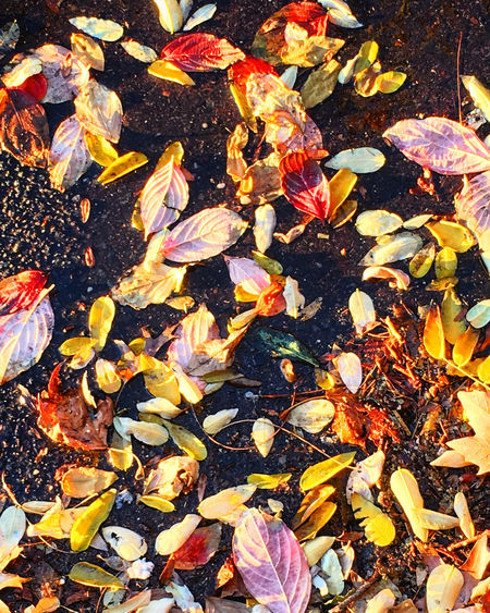Autumn in Winter Autumn Autumn Leaves Botany Change Close-up Fall Colors Fall Leaves Fallen Leaves Flower Growth Leaf Leaves Nature No People Season  Variation Yellow