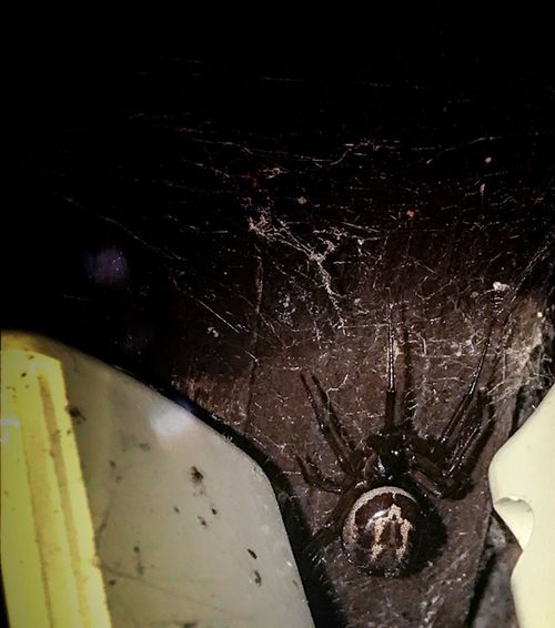 Close-up Indoors  No People Night False Widow Spider Spider Web
