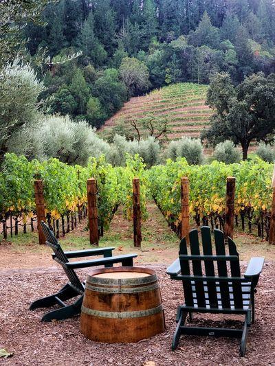 Wine View Plant