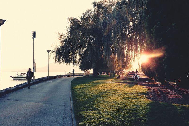 Le soleil ce couche :-) La Suisse Lac Coucher De Soleil Promenade
