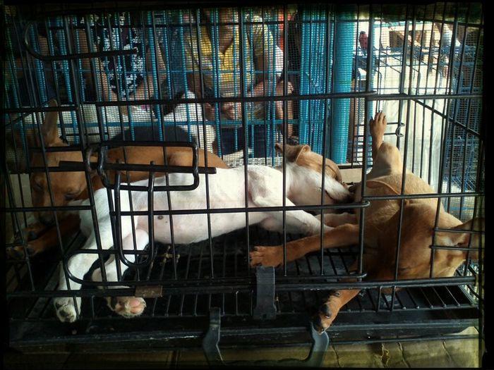 Ang Mga Tamad Na Puppies, Sige Lang Tulog! Kakyuuuute Nalang Jud Nanana! Kusion Bi.